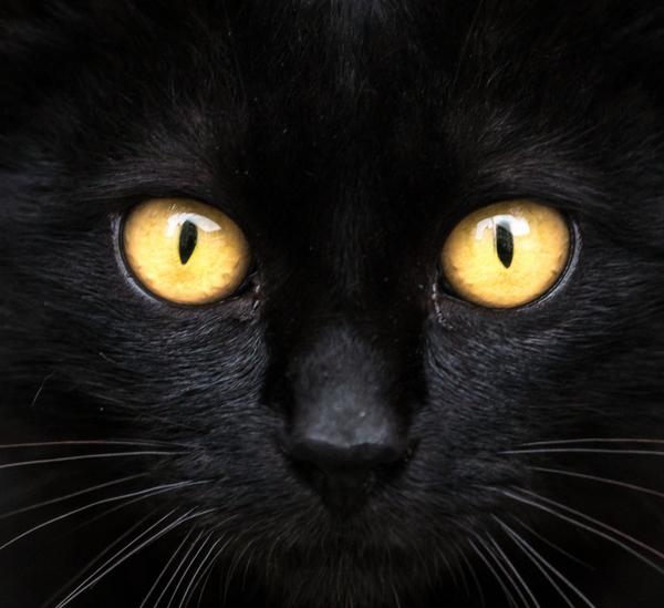 Chat noir, un symbole classique de la couleur noire.