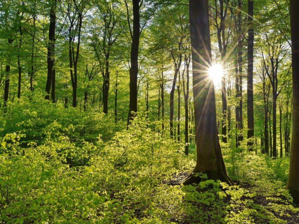 Psychologie de la couleur verte
